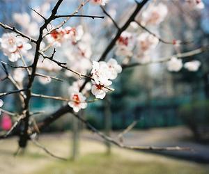 flowers, nature, and sakura image