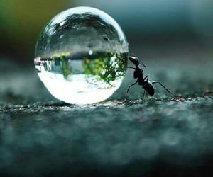 ant, bubble, and nature image