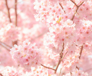 flowers, pink, and dubtrackfm image