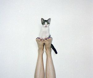cat, legs, and feet image