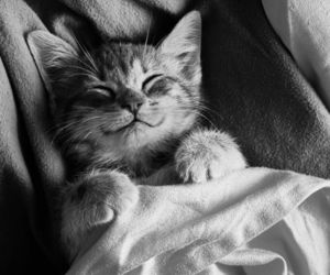 bed, black and white, and cat image