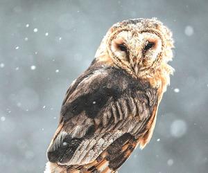 animal and owl image
