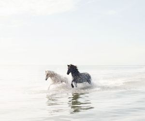 horse, animal, and ocean image