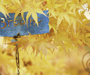autumn, blue, and leafs image