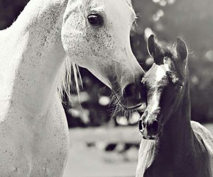 animals, beauty, and equestrian image