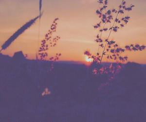 flowers, nice, and sunset image