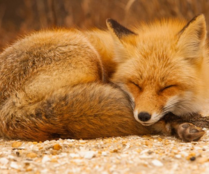 lovely, cute, and animals image