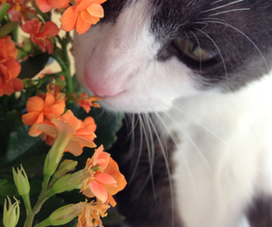 cat, flowers, and pretty image