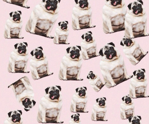 background, pink, and pug image
