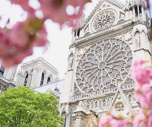 flower, paris, and spring image