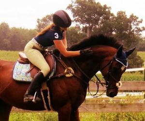 horse, beautiful, and pony image