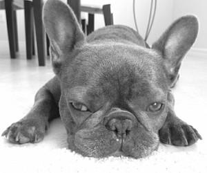 black, dog, and ears image