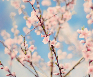 blossom, blue, and cloud image