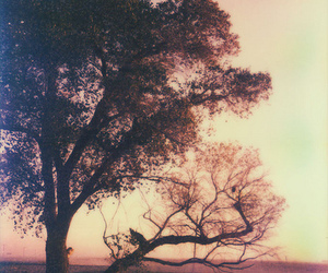tree, photography, and nature image