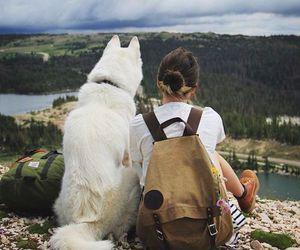 dog, travel, and nature image