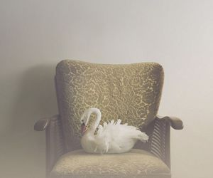Swan, vintage, and chair image
