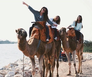 beach, camels, and love it image