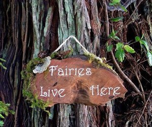 fairy, magic, and nature image