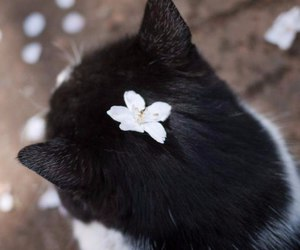cats, sun, and flowers image