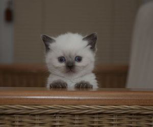adorable, kitten, and miss her image