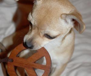dog and peace image