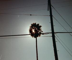 blue sky, palm tree, and photo image