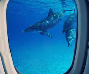 dolphin, down, and fly image