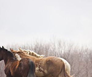 horse, photography, and nature image