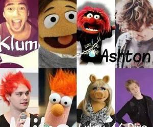 5sos, the muppets, and luke hemmings image