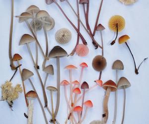 mushroom and color image