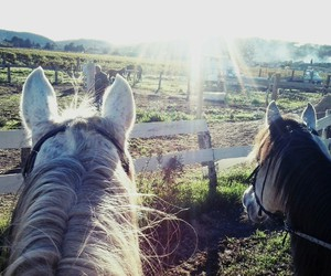 cheval, chevaux, and field image