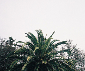 palms, green, and palm trees image