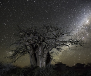 night, oldest, and trees image