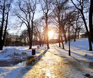 park, snow, and trees image