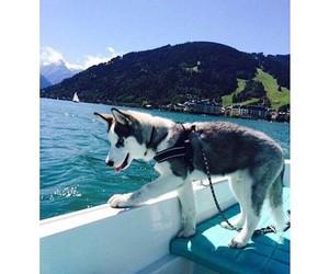 cute, dog, and girly image