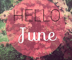 flowers, june, and summer image