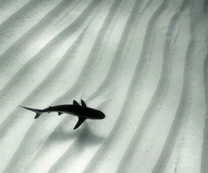 shark, pale, and ocean image