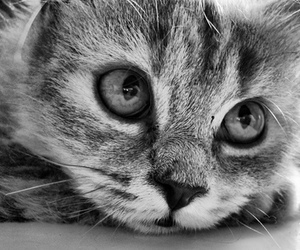 cat, black and white, and eyes image