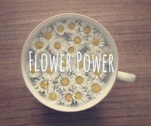 flowers, power, and cup image