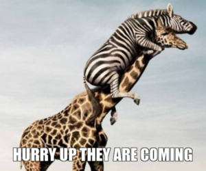 funny, giraffe, and text image