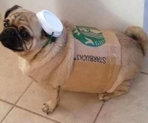 dog, starbucks, and cute image