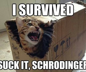 cat, funny, and schrodinger image