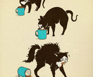 cat, coffee, and funny image