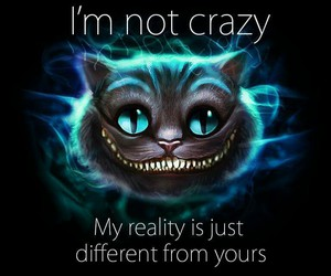 crazy, cat, and reality image