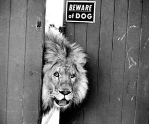 lion, dog, and black and white image