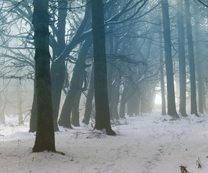 nature, winter, and place image