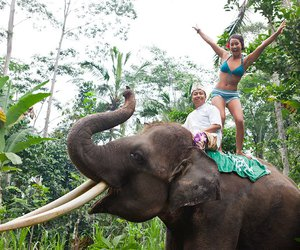summer, elephant, and tropical image