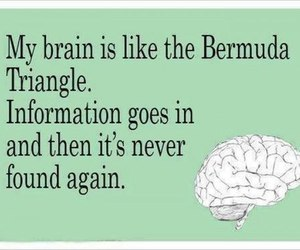 brain, funny, and bermuda triangle image