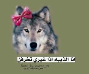 عربي and بنات image