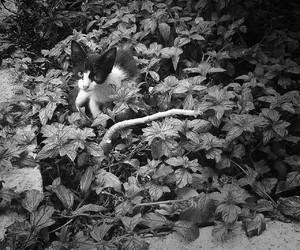 aw, black and white, and cat image